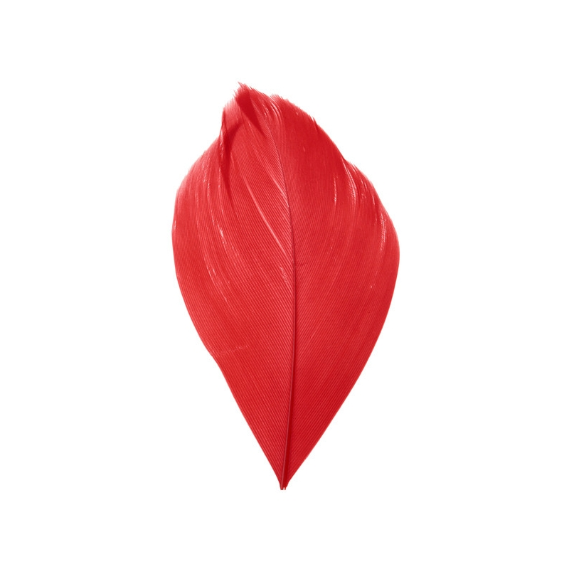 plume rouge